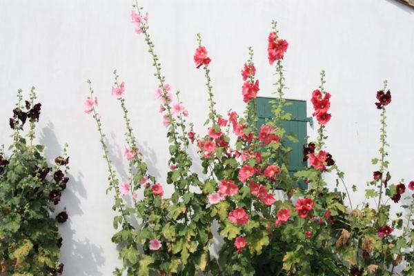 Les Portes Fleurs de l'ile de Ré - Chi Kung Jin Ling France